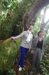 Girardin et Royal - forêt gabonaise